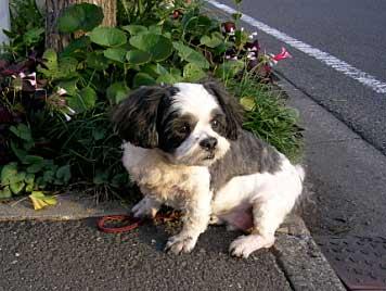 愛犬「ルーク」11歳