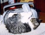 哺乳ビンをくわえる猫