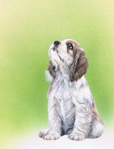 犬、コッカースパニエル